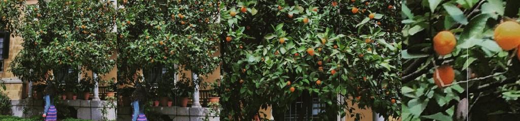 Oranges 1-4